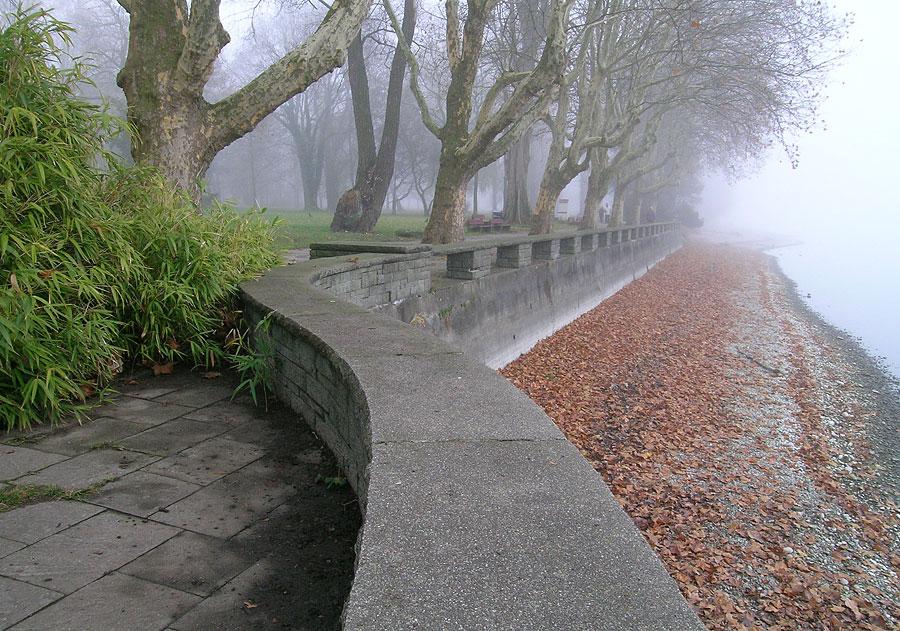 Herbstnebel in Radolfzell