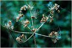Herbstperlchen...