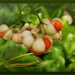 Herbstperlen