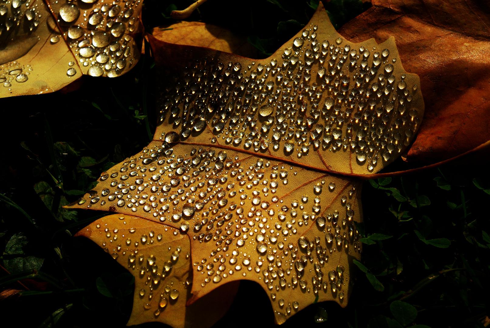 Herbstperlen.....