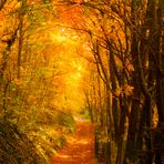 Herbstpfade