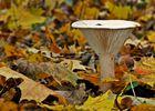 Herbstpilz....