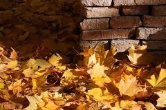 Herbstrascheln