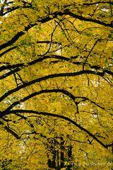 Herbstrausch 2