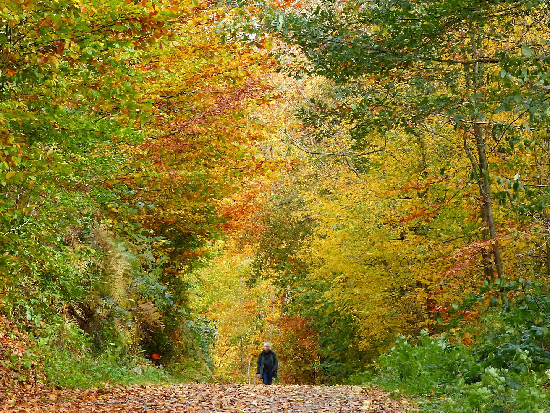 Herbstrausch der Farben