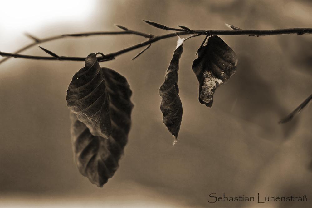 Herbstreste im Winter