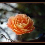 Herbströschen 2
