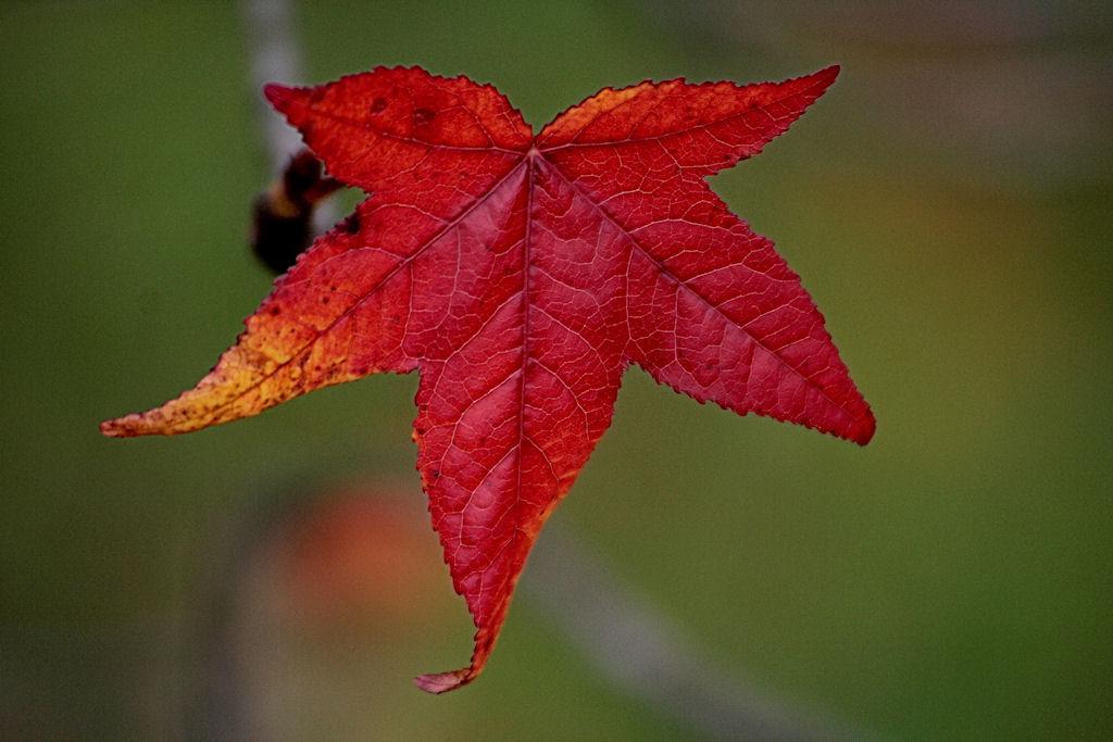 Herbstrot II