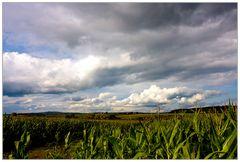 Herbstsachen [7] Maisfeld