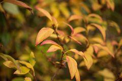 Herbstsafari-5472-2