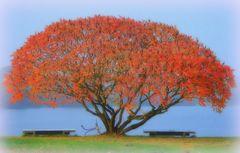 Herbstschönheit
