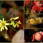 Herbstschönheiten...