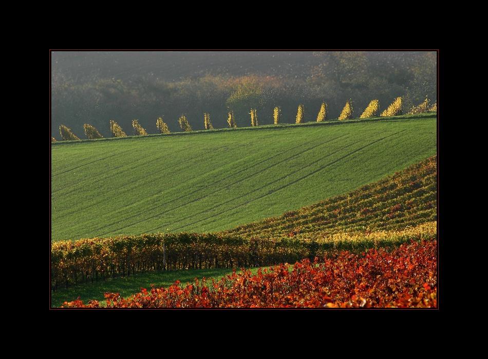 Herbstschwung