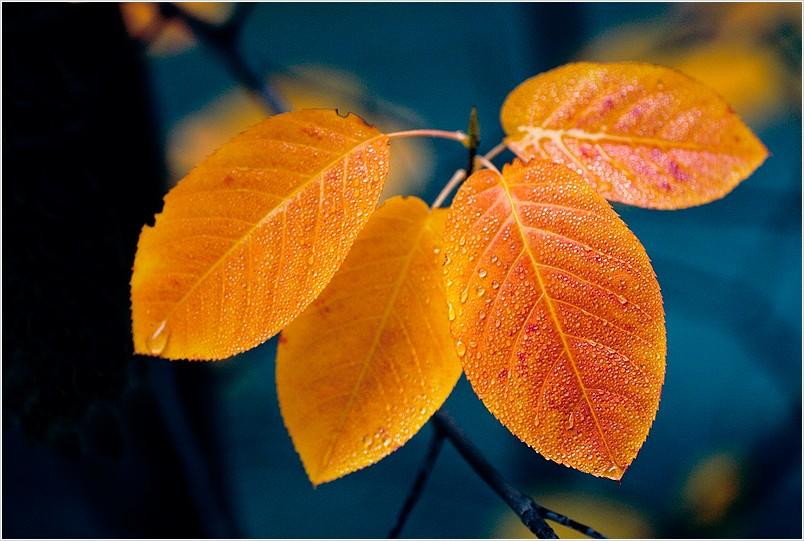 Herbstsonate für Blätterquartett