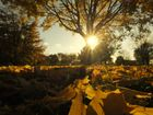 Herbstsonne...