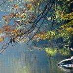 Herbstsonne an der Aist