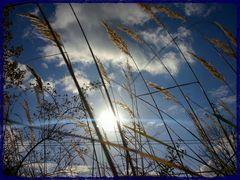 Herbst(Sonne)