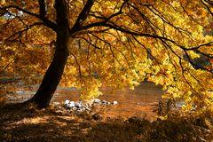 Herbstsonne im Siegtal
