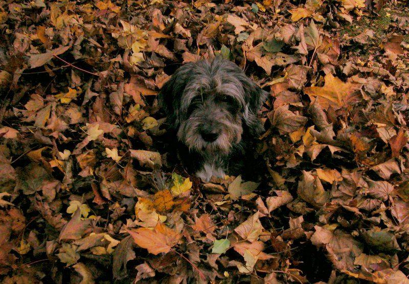 ...Herbstspass...