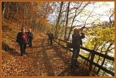 Herbstspaziergang #1
