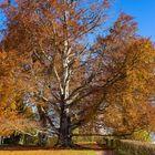 Herbstspaziergang 1