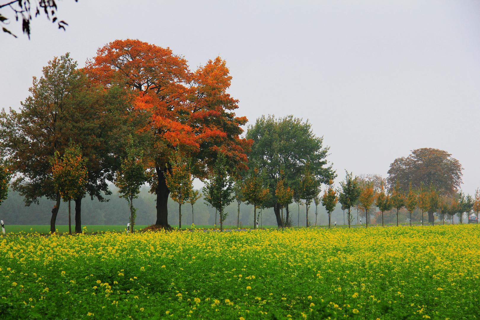 """Herbstspaziergang!"""