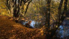 Herbstspaziergang ...