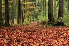 - Herbstspaziergang -