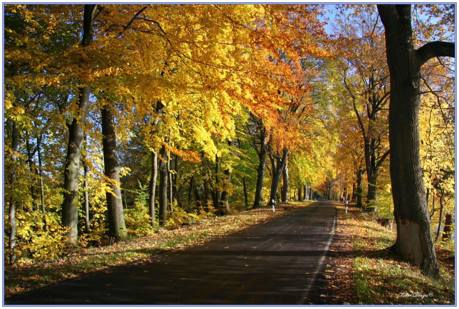 Herbstspaziergang am 31.10.2010