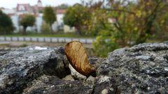 Herbstspaziergang auf dem Wehrgang 2