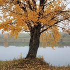 Herbstspaziergang auf der Donauinsel Wien