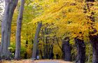 Herbstspaziergang............