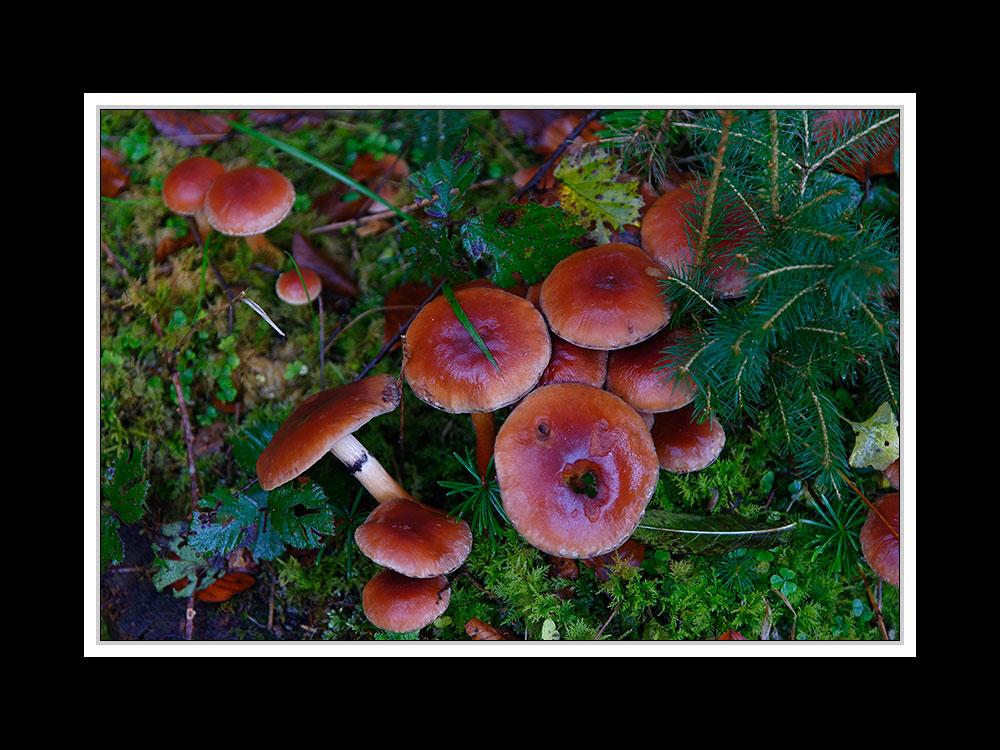 Herbstspaziergang Burgkirchen/Alz 06
