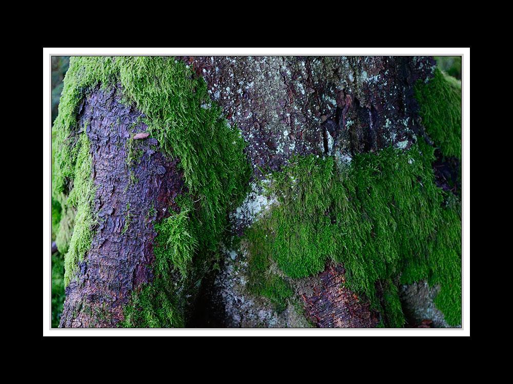 Herbstspaziergang Burgkirchen/Alz 07