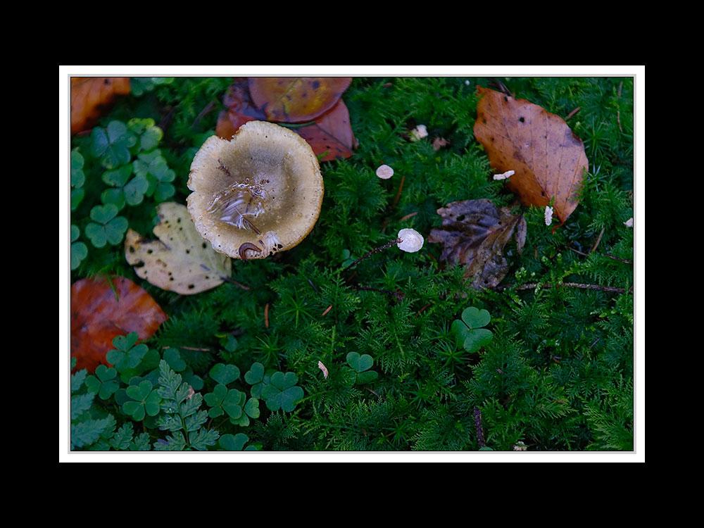 Herbstspaziergang Burgkirchen/Alz 09