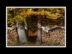 Herbstspaziergang Burgkirchen/Alz 12