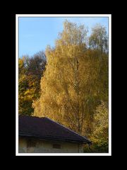 Herbstspaziergang Burgkirchen/Alz 13