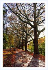 Herbstspaziergang  im Laub