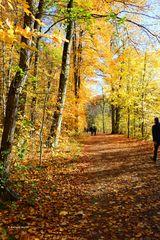 Herbstspaziergang im November