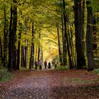 Herbstspaziergang in Chemnitz I