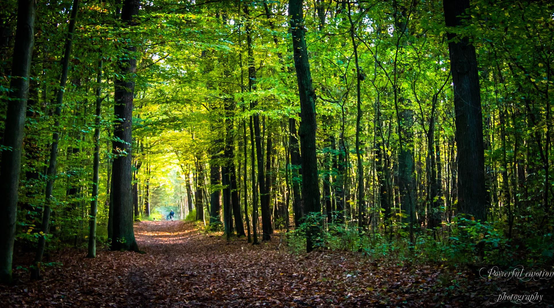 Herbstspaziergang in der Heide