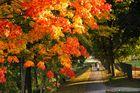 Herbstspaziergang in Oranienburg