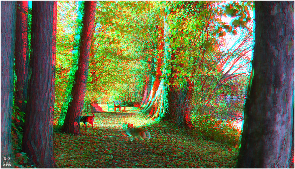 Herbstspaziergang mit Hunden (3D-Anaglyphe+MPO-Link)