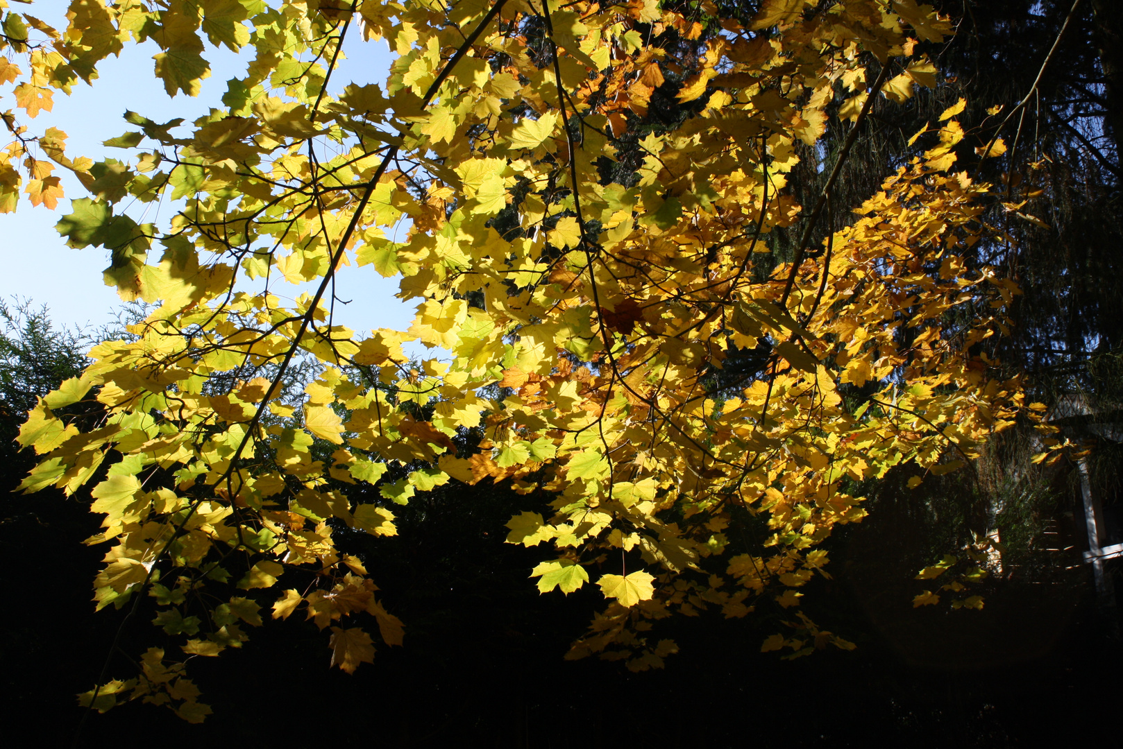 Herbstspaziergang Teil 4
