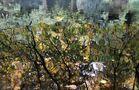 Herbstspiegelung von Jan Eckel