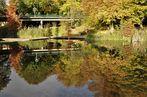Herbstspiegelung im Grugapark in Essen