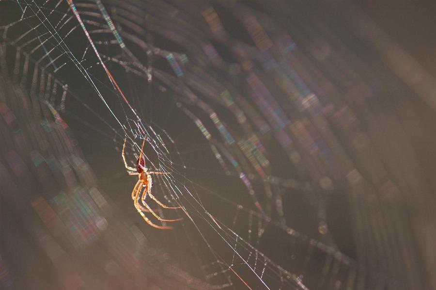 herbstspinne - spinnenherbst