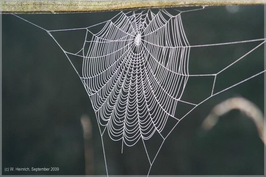 Herbstspinnen 2