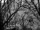 Herbstspinnennetze