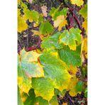 Herbstspuren